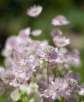 botaniska-blommaIMG_7117