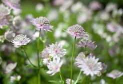 botaniska-blommorIMG_7118