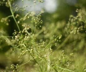 botaniska-grönIMG_7109