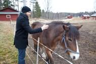 john-häst