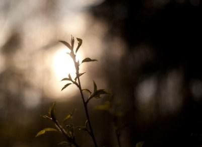 solnedgång-siluett