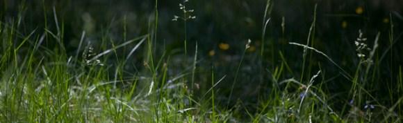 grönt-gräs