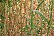 bambu-portugal