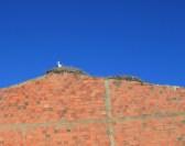 stork-silves-portugal
