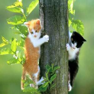 download free cat screensaver