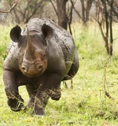 wraith black rhino [ 1400 x 867 Pixel ]