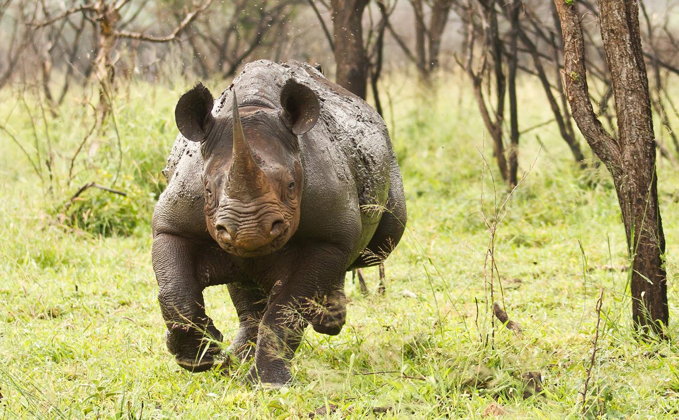 hight resolution of wraith black rhino