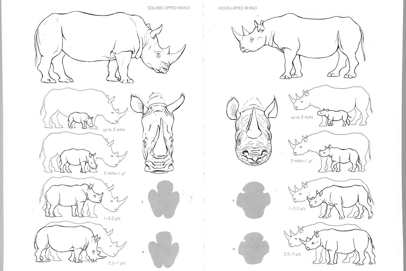 The Difference Between The White and Black Rhino