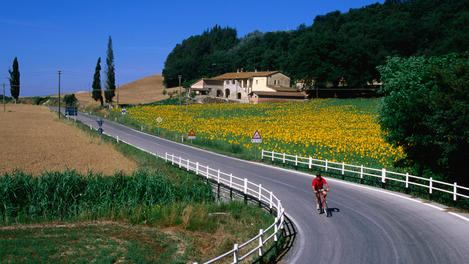 Person riding bike along road with field of sunflowers on one side.