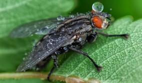 Insekternas värld