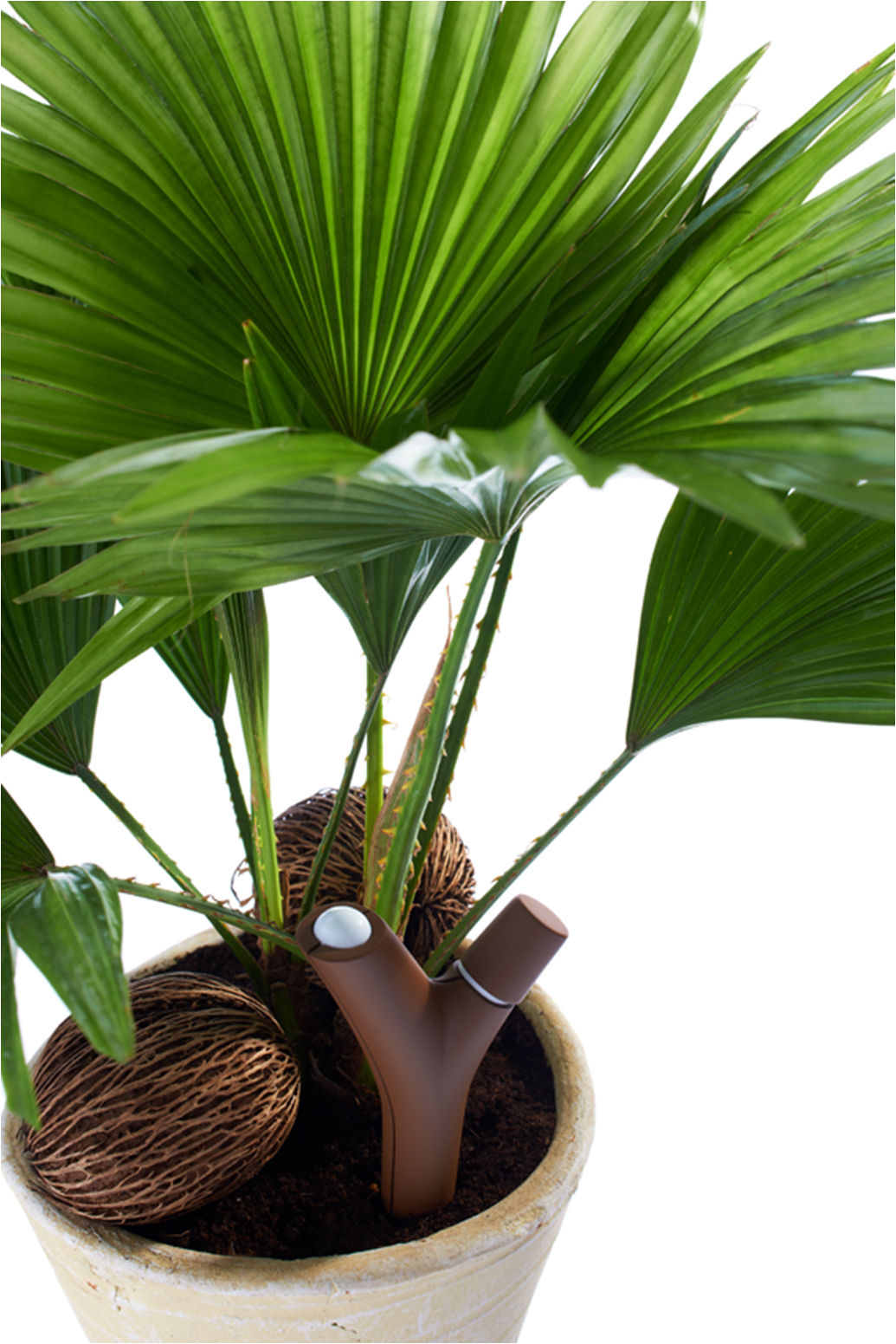Flower Power Fur Pflanzen
