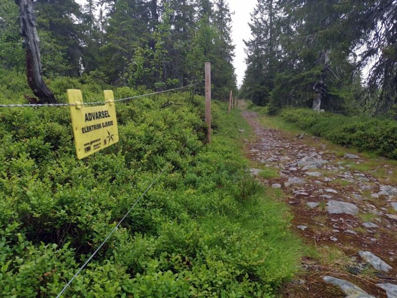 Turen går fra toppen og nedover langs strømgjerdet.