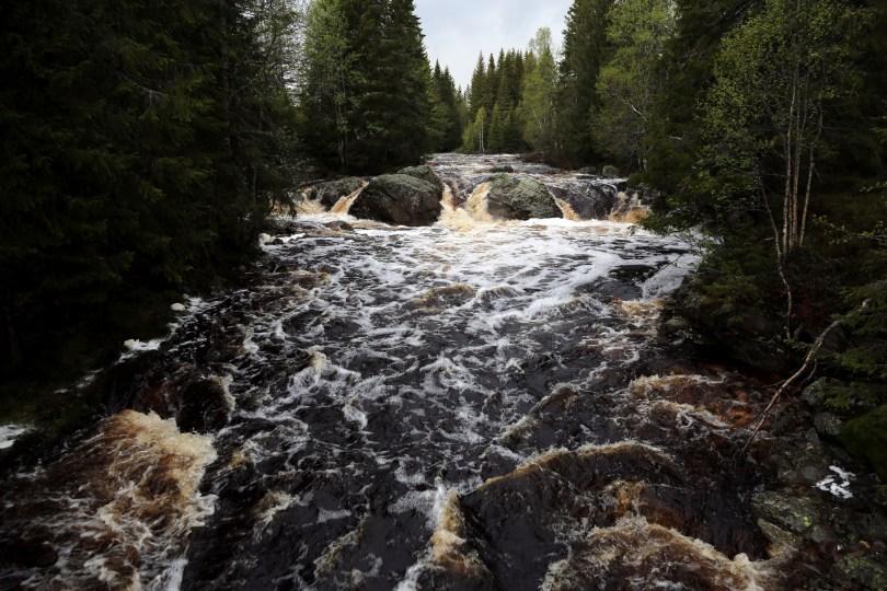 Vårflom med stor vannføring i Øksna, elva som renner gjennom Korpreiret.