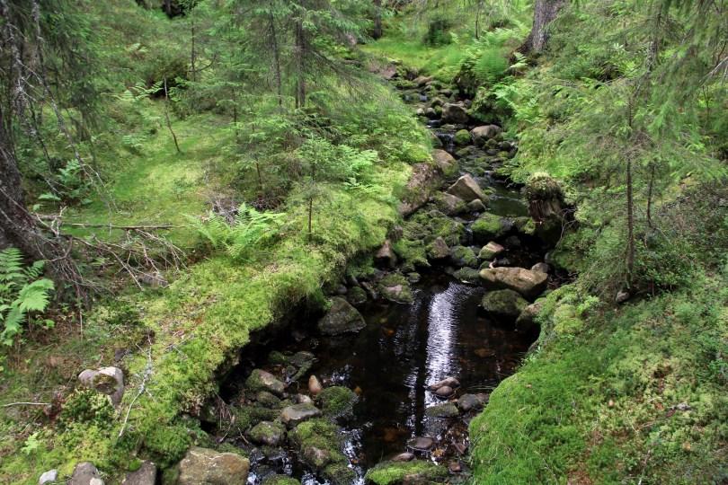 Det er mange fine områder rundt Korpreiret canyon. Her ved en av sidebekkene, som mater Øksna nede i Korpreiret.