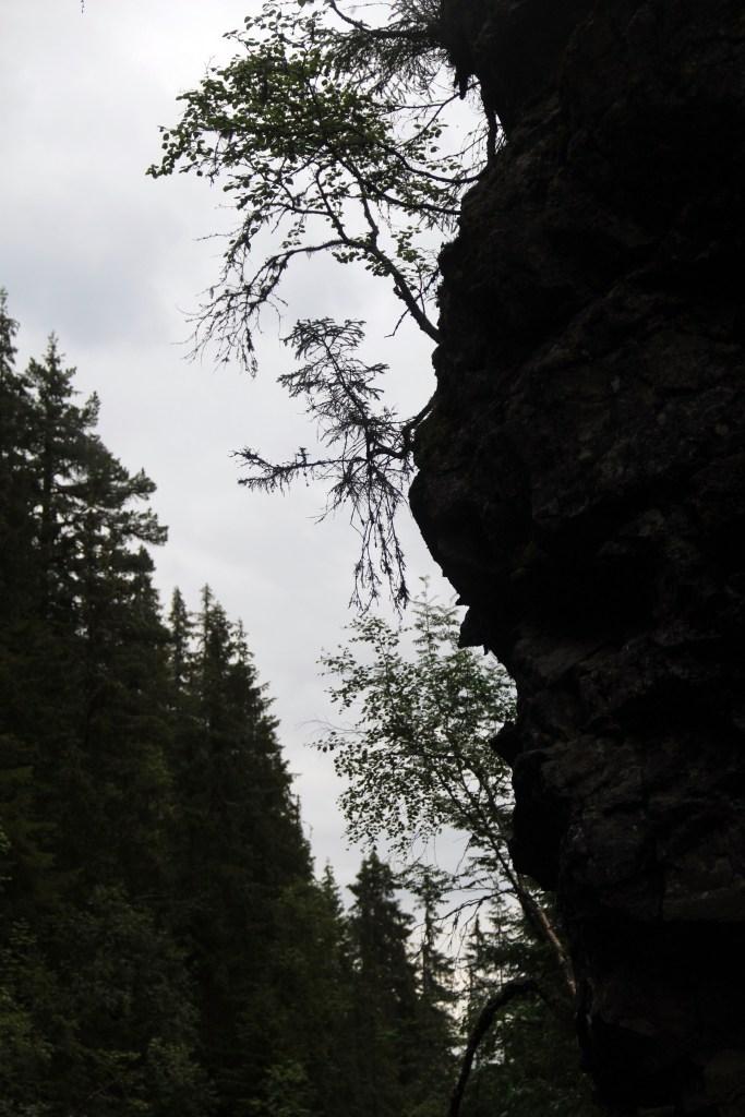 FRA BUNNEN AV JUVET: I bunnen av juvet: På tur nede i Korpreiret, mellom øvre og nedre fossefall et sted. Det er ikke alle steder det er mulig å komme ned, men enkelte steder er det mulig å følge tråkket eller stien helt ned i bunnen av juvet.