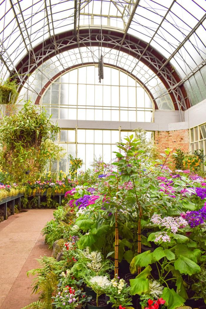 växthus i auckland domain