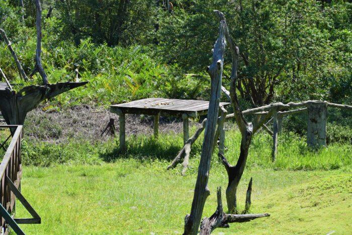 plattform b Labuk Bay Proboscis Monkey Sanctuary