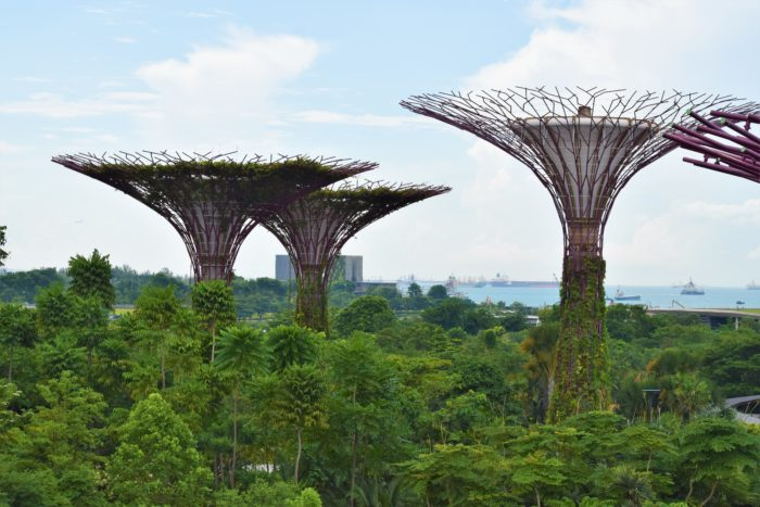 supertrees gardens by the bay