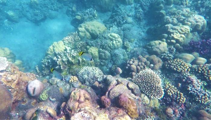 koraller och fiskar i salomonöarna