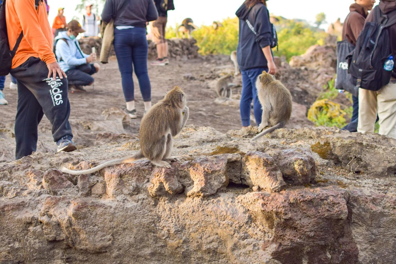apor uppe på mount batur.