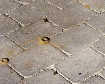 Myror på altanten? Så bekämpar du dem