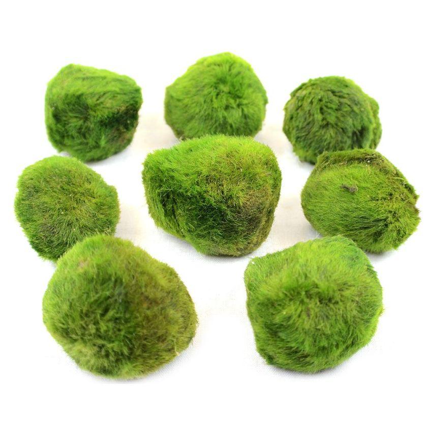 Zooplants Lot de pelotes d'algues pour aquarium - 8 pelotes d'algues