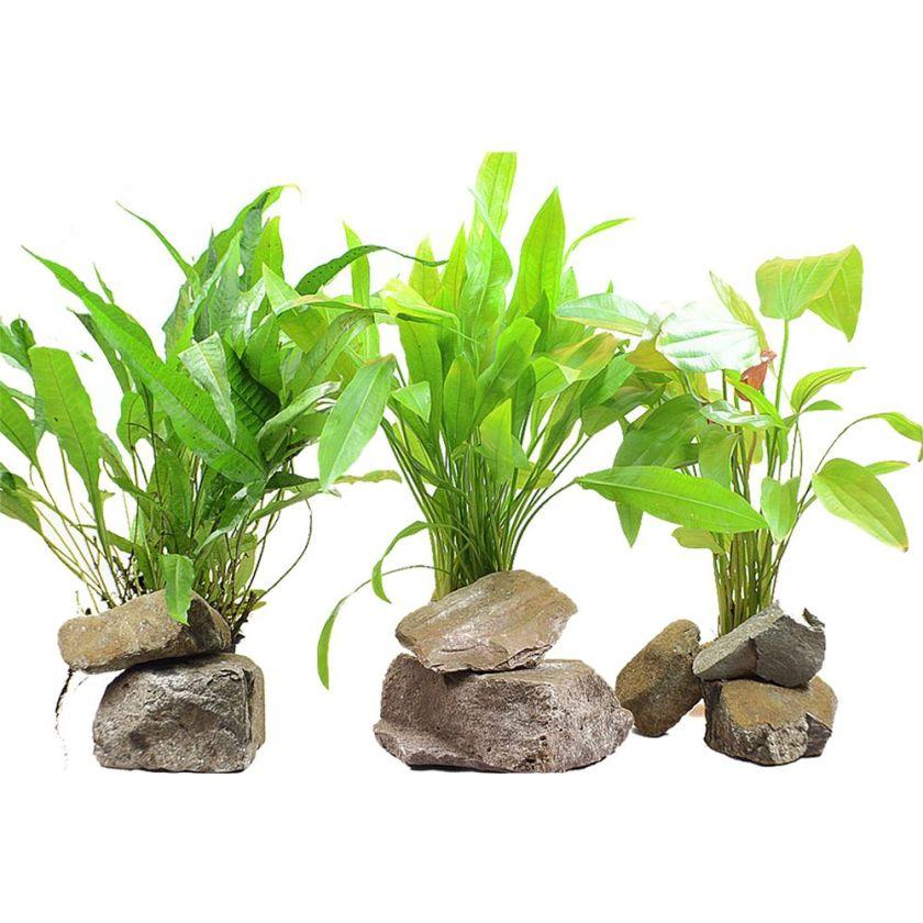 Plantes d'arrière-plan Zooplants XL pour aquarium - 3 plantes en pot