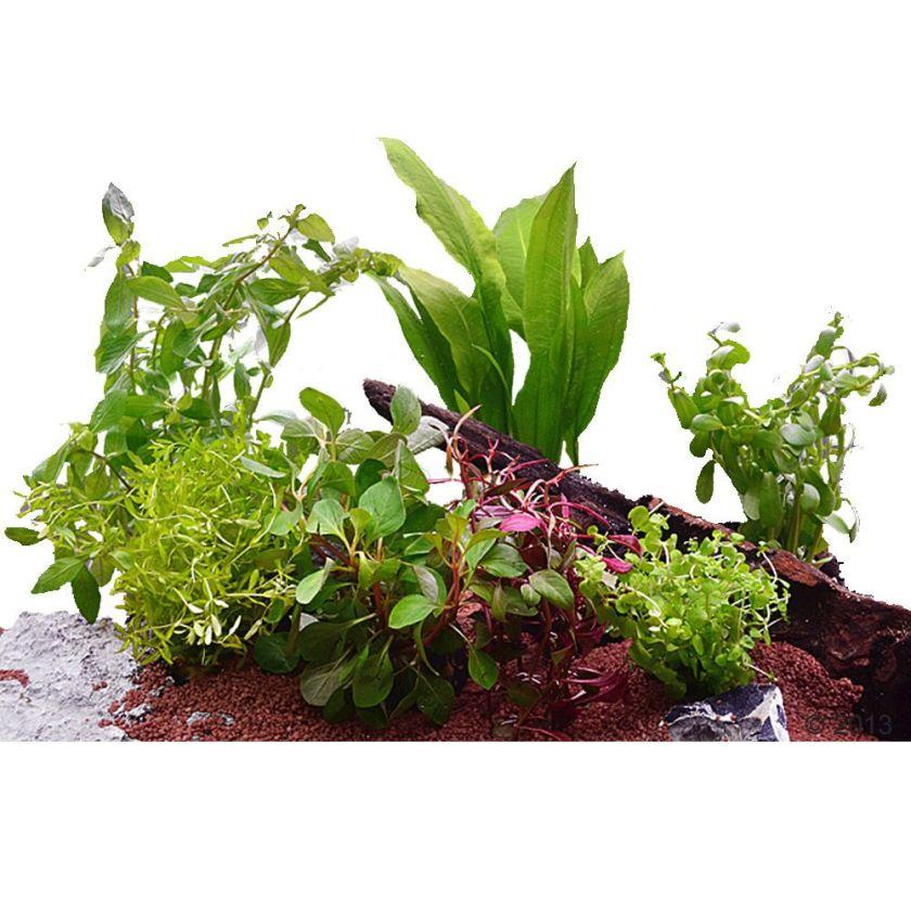 7 plantes pour aquarium de 60cm en pot - Plante pour aquarium