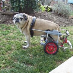 Wheelchair Dog Decorative Desk Chairs Without Wheels Dogs Criticallyrated