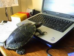 slow laptop computer turtle