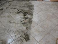 Coastal Carpet Cleaners Panama City Florida | Taraba Home ...