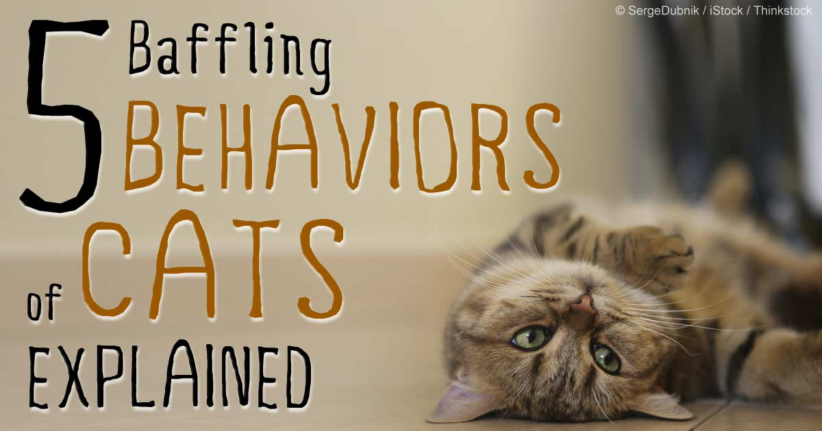 5 Baffling Cat Mannerisms and What They Mean