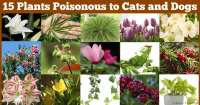 15 Poisonous Plants Your Pets Should Avoid
