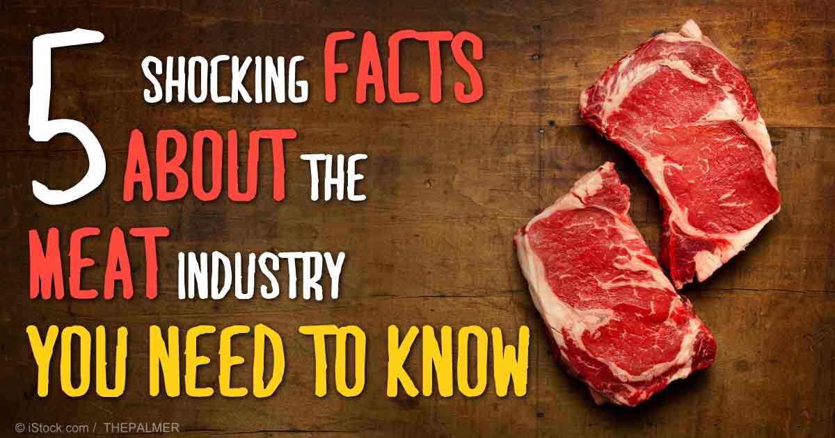 Shocking Facts About The Meat Industry