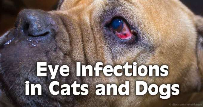 Can I Use Human Eye Drops On Dogs