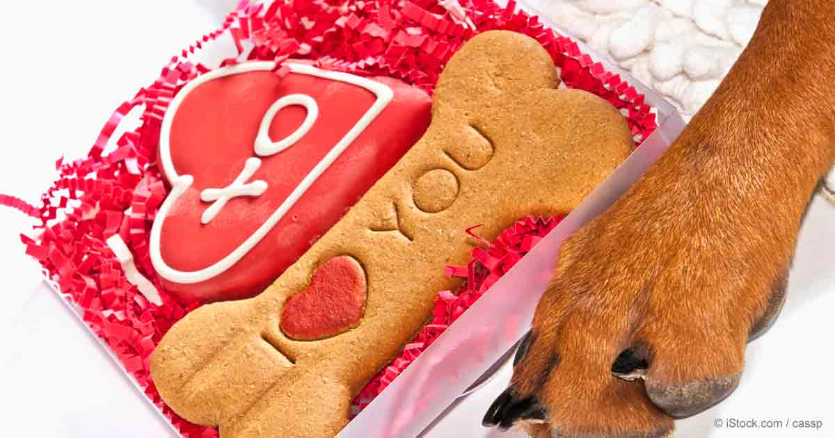 A Valentines Day For The Dogs Or Cats