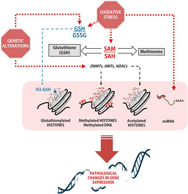 glutathione influences pathological changes in gene expression