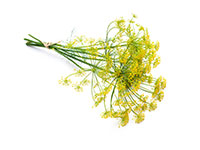 Sweet Fennel Oil