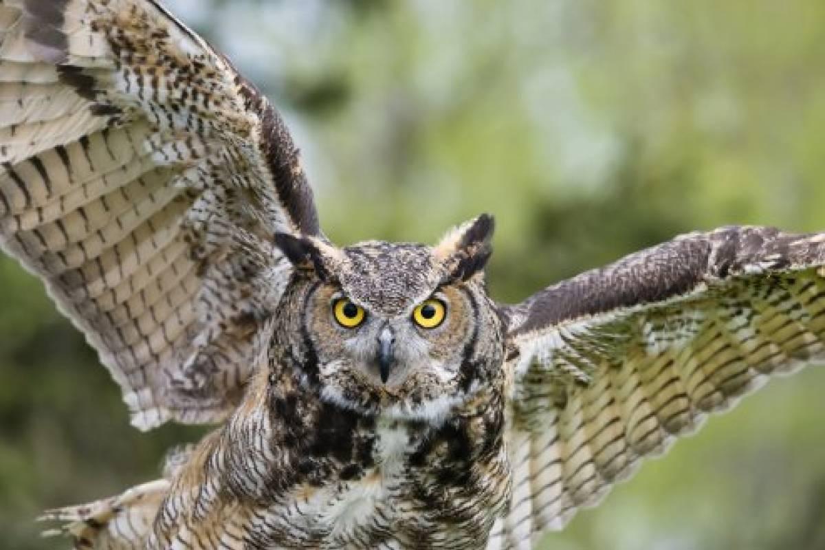 20+ Koleski Terbaru Sketsa Gambar Kolase Burung Hantu Dari ...