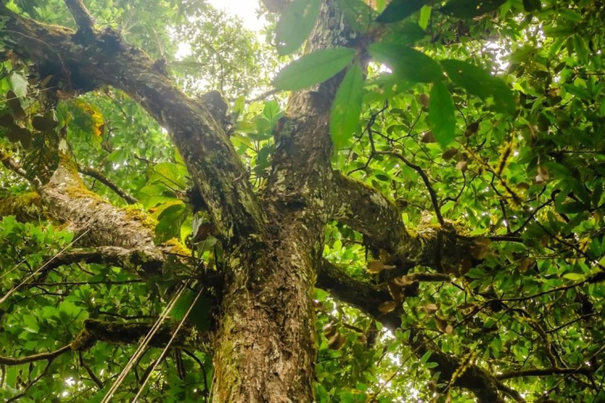 Brasil perdeu 1,36 milhão de hectares de florestas virgens em 2019, diz estudo