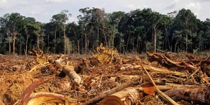 Resultado de imagem para FUNDO AMAZÔNIA, OS VIKINGS E A NOVA ERA BRASILEIRA!
