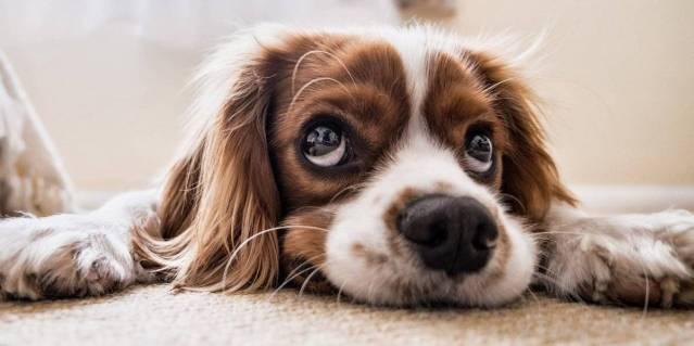Dieta do pet: Estes são os alimentos que os cachorros podem comer com consumo regulado