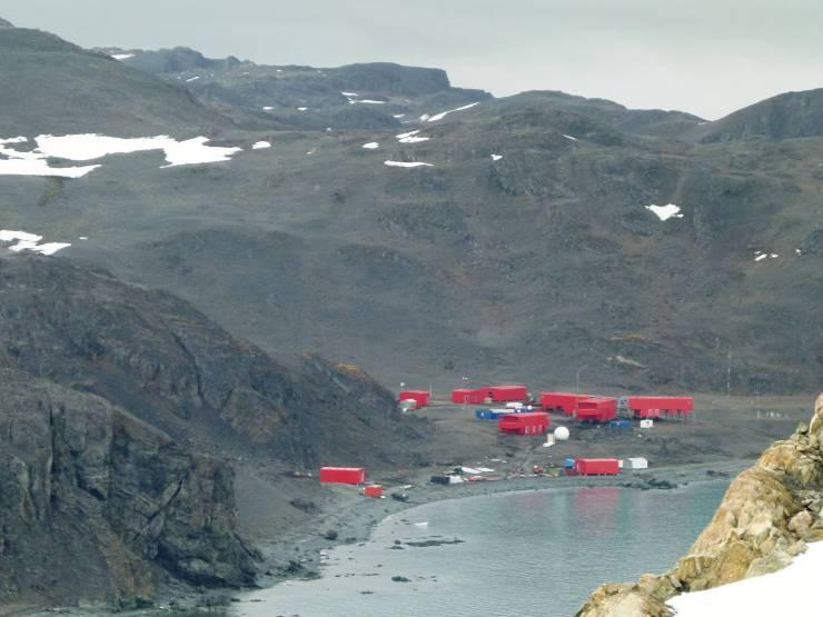 Antártida: florece pasto en el territorio chileno tras derretimiento de la nieve