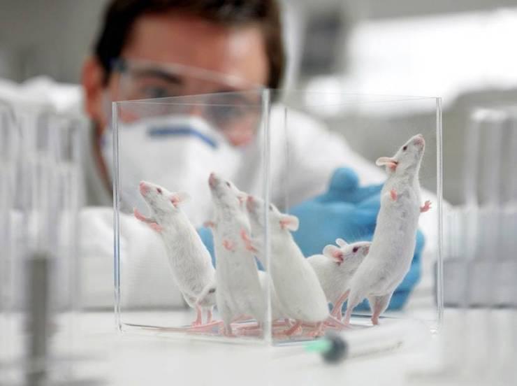 Coronavirus: científicos de Estados Unidos encuentran posible cura para la enfermedad