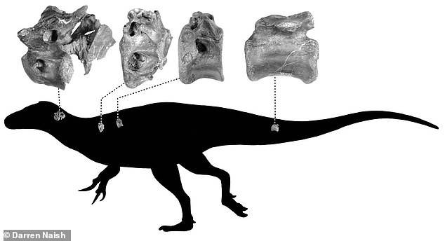Huesos Dinosaurio