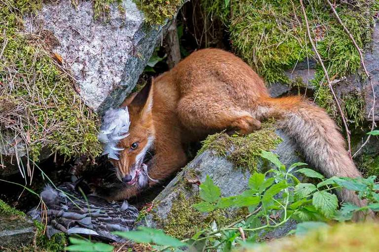 El ganador al premio de fotografía joven de Vida silvestre 2020.