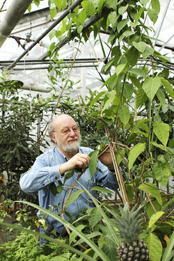 Dennis McKenna has taken ayahuasca hundreds of times since 1981.