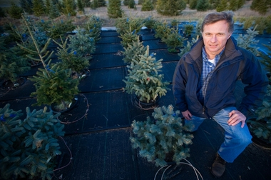 Bert Cregg, A, associate professor of horticulture, poses next the a row of pine trees on Monday November 29, 2010. Cregg is researching methods to help tree farmers produce better yields.