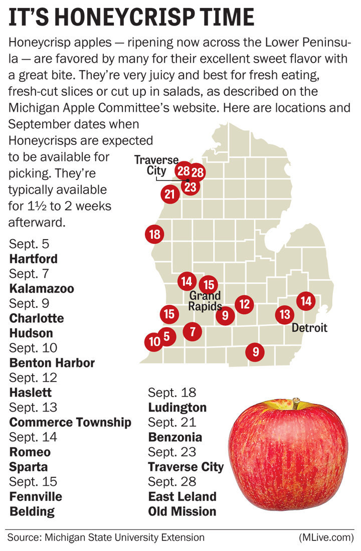 Michigan Honeycrisp apple crop this year is excellent experts say  MLivecom