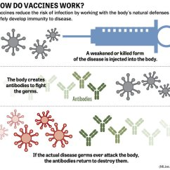 Diagram Of How Vaccines Work Cat6 Lan Cable Wiring Do Vaccinations The Science Immunizations Mlive Com